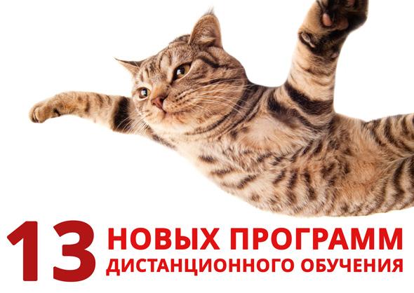El-gato-volad